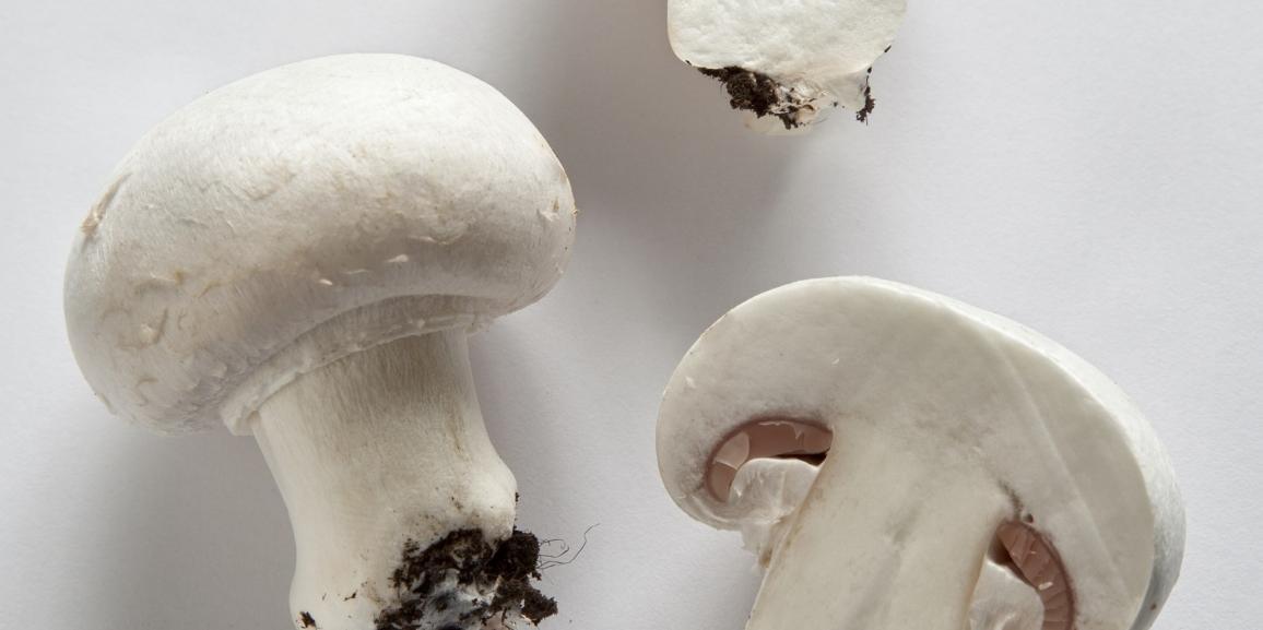Medicina da un fungo di piede
